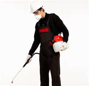 commercial pest control homestead